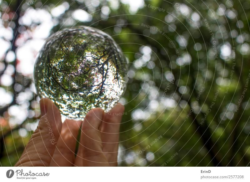 Tree Branches and Leaves Captured in Glass Ball Nature Beautiful Green Landscape Hand Red Leaf Autumn Environment Funny Art Earth Brown Design Fresh