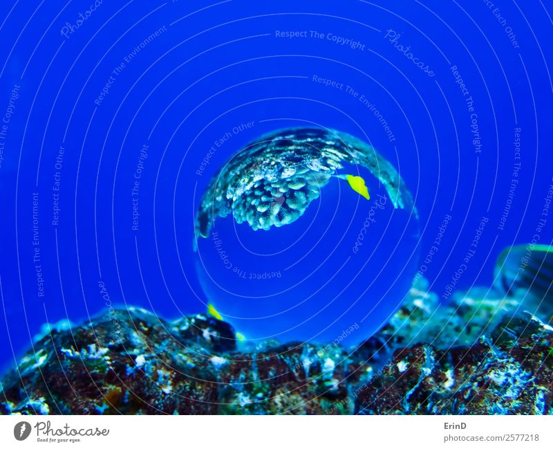 Glass Ball on Reef with Yellow Tropical Fish Nature Vacation & Travel Blue Beautiful Ocean Relaxation Joy Environment Sports Adventure Uniqueness Discover