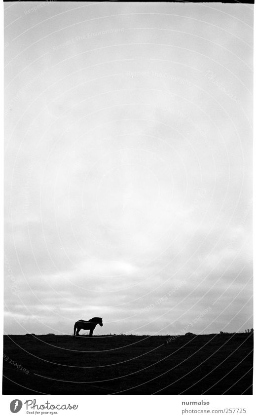 Sky Nature Calm Loneliness Animal Relaxation Autumn Meadow Dark Landscape Horizon Contentment Leisure and hobbies Natural Horse Sign