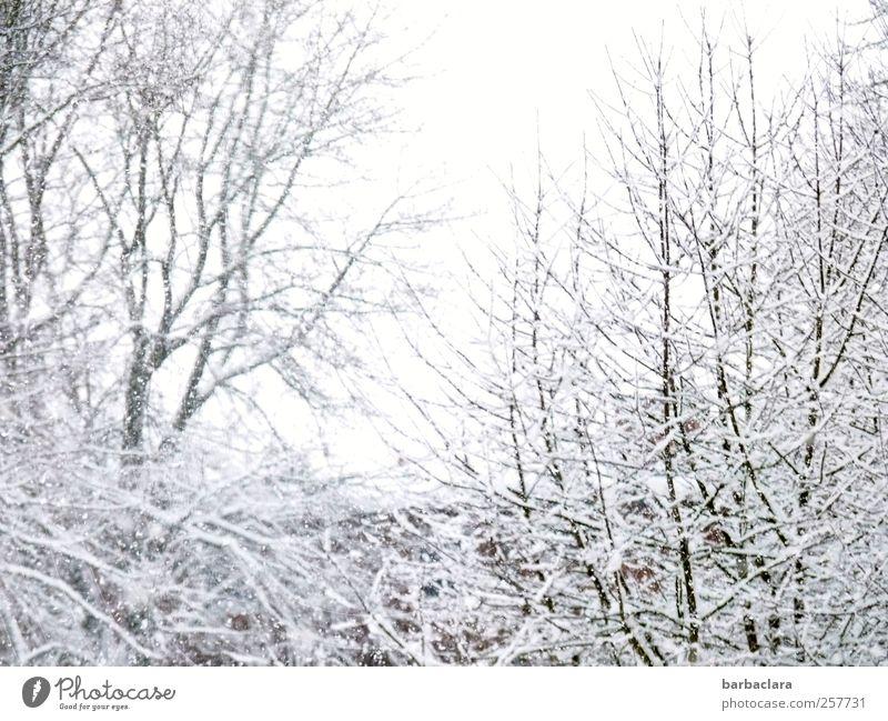 It's snowing Nature Landscape Winter Snow Snowfall Tree Bushes Branch Park Building Roof Esthetic Bright Cold White Joy Anticipation Calm Surprise Bizarre
