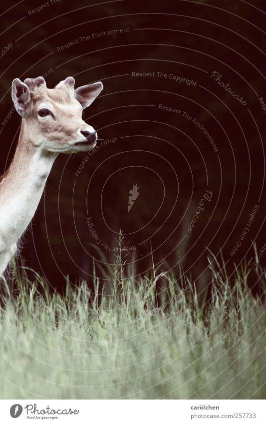 Green Animal Brown Wild animal Curiosity Expectation Roe deer