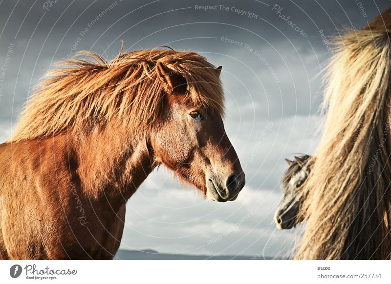 Sky Nature Clouds Animal Environment Landscape Moody Wind Wait Natural Wild Wild animal Esthetic Stand Horse Cute