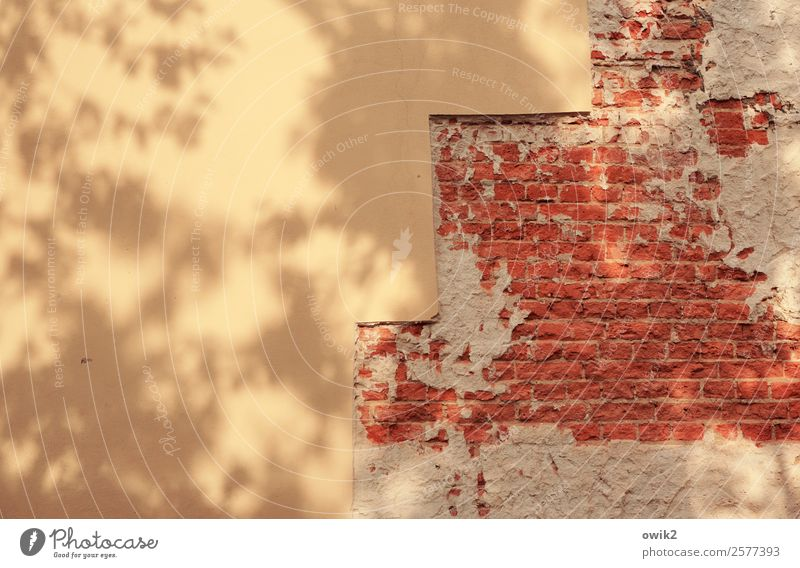Without railing Wall (barrier) Wall (building) Facade Stone Yellow Red Shade of a tree Brick Brick wall Stairs Colour photo Exterior shot Close-up Abstract