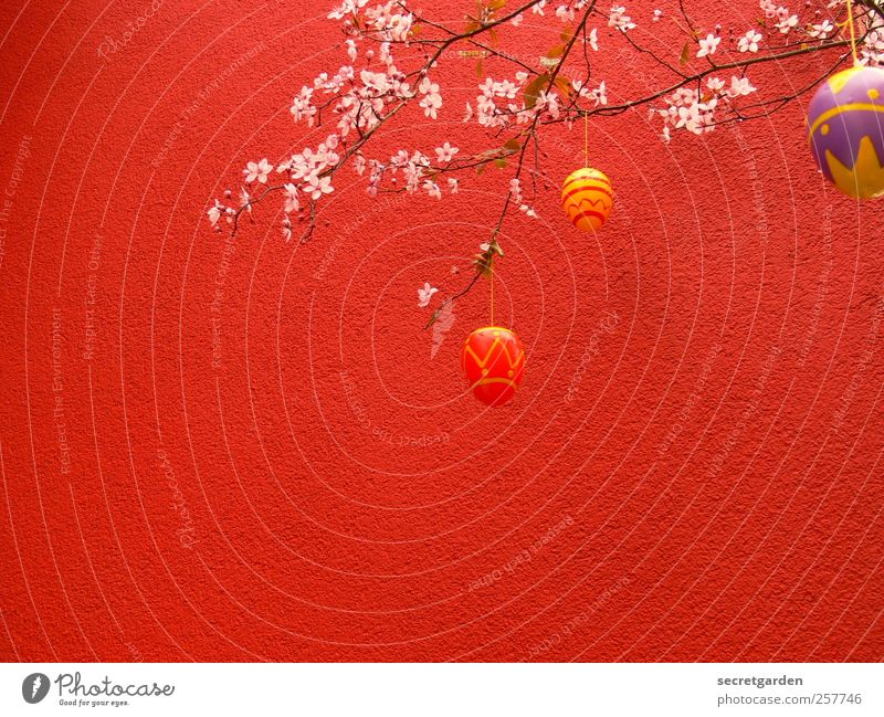 Tree Red Plant Flower Nutrition Wall (building) Wall (barrier) Spring Feasts & Celebrations Facade Decoration Bushes Romance Kitsch Easter Blossoming