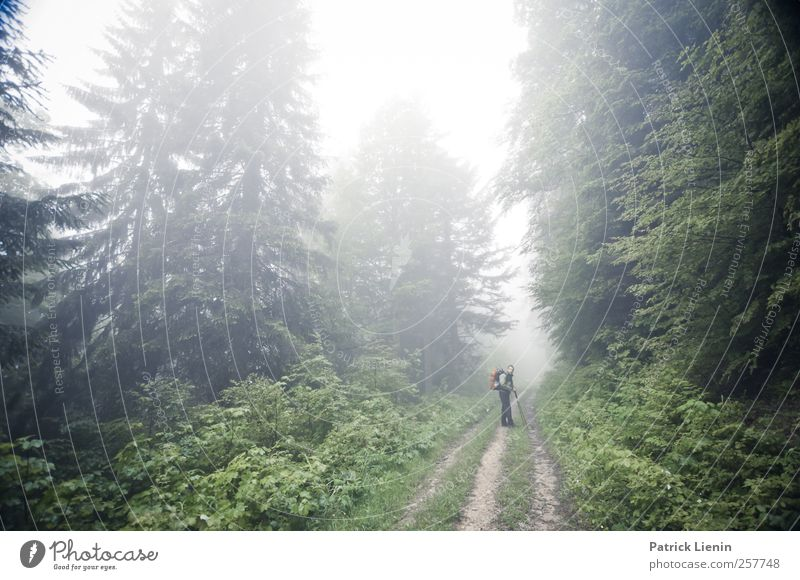 Human being Nature Vacation & Travel Plant Tree Relaxation Landscape Calm Far-off places Forest Environment Mountain Street Freedom Masculine Weather