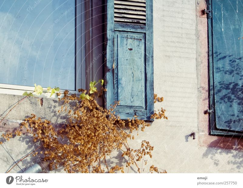 Old Blue House (Residential Structure) Window Wall (building) Building Wall (barrier) Facade Detached house