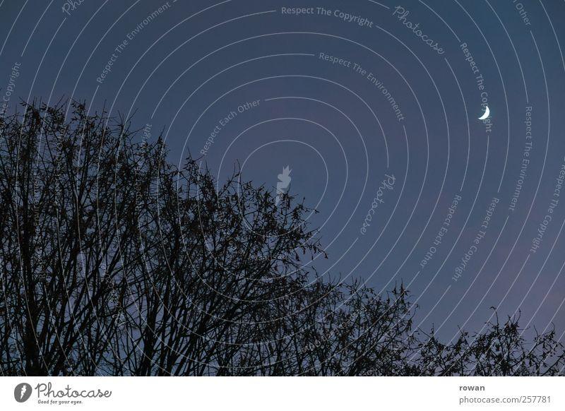 Sky Blue Tree Dark Sleep Bushes Moon Night sky Cloudless sky Crescent moon