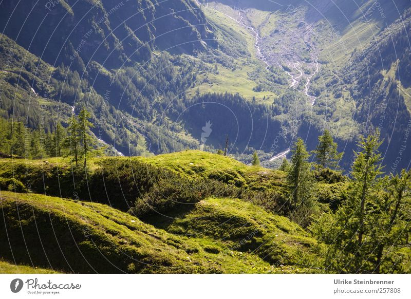 Green Abyss Vacation & Travel Tourism Summer Mountain Environment Nature Landscape Plant Beautiful weather Tree Grass Bushes Moss Hill Rock Alps Hohen Tauern NP