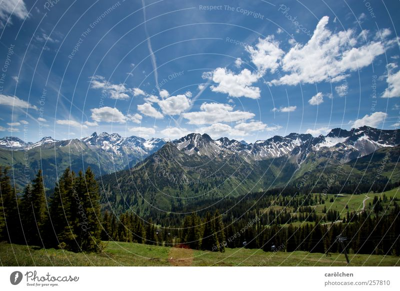 Nature Blue Green Forest Environment Landscape Mountain Alps Blue sky Allgäu Oberstdorf