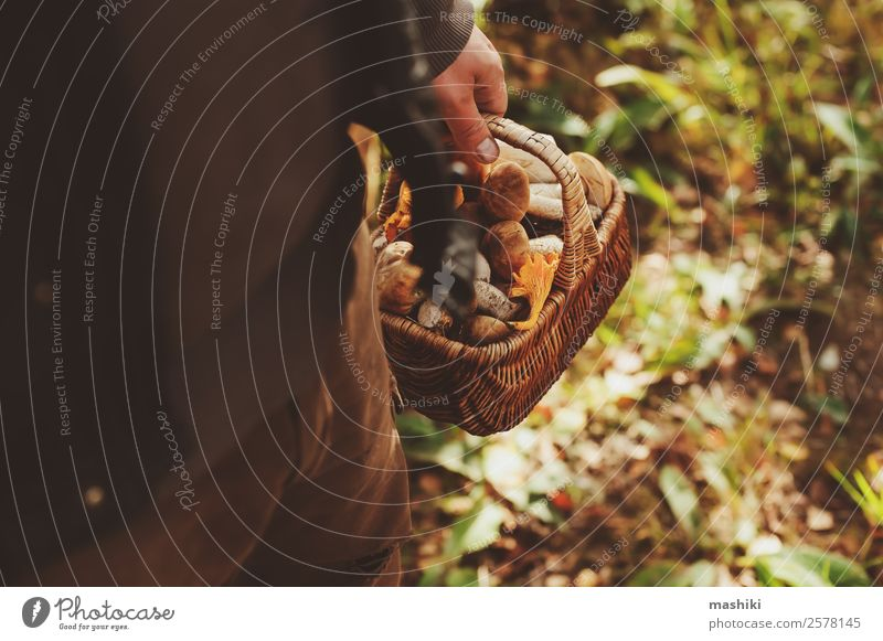 picking wild mushrooms in autumn forest Vegetarian diet Lifestyle Hunting Summer Nature Autumn Leaf Forest Fresh Natural Wild Brown explore Mushroom Seasons