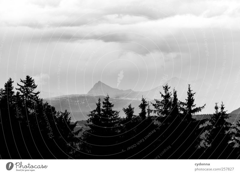 Such weather Environment Nature Landscape Clouds Storm clouds Summer Weather Bad weather Wind Rain Forest Alps Mountain Loneliness Uniqueness Experience