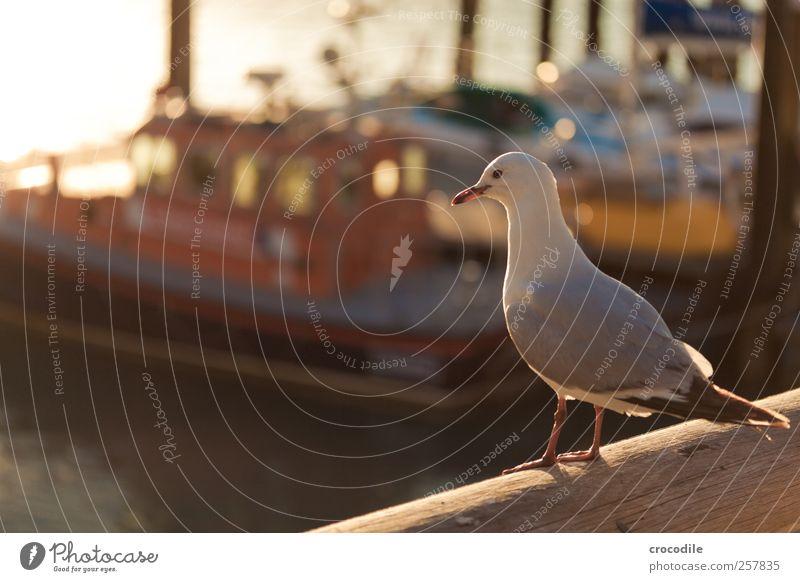 New Zealand 183 Nature Landscape Bay Island Nelson-Picton Passenger ship Fishing boat Animal Wild animal Bird Seagull Observe Esthetic Authentic Happiness
