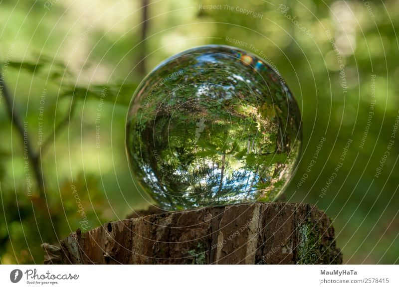 Crystal ball Nature Landscape Plant Air Spring Summer Autumn Tree Grass Leaf Wild plant Garden Park Forest Magnifying glass Balloon Wood Glass Happy Happiness