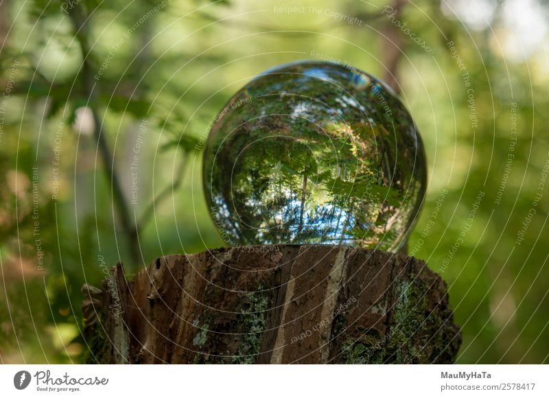 Crystal ball Nature Landscape Plant Air Spring Summer Autumn Climate Tree Grass Leaf Wild plant Garden Park Forest Mirror Magnifying glass Balloon Glass