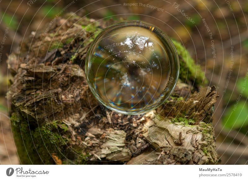 Crystal Ball Nature Plant Earth Air Spring Summer Autumn Tree Grass Wild plant Garden Park Forest Mirror Wood Glass Happy Euphoria Cool (slang) Optimism Success