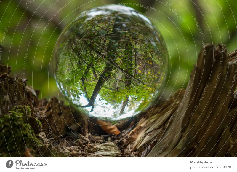Crystal Ball Nature Landscape Plant Spring Summer Autumn Climate Tree Grass Wild plant Garden Park Forest Magnifying glass Balloon Wood Glass Happy Enthusiasm