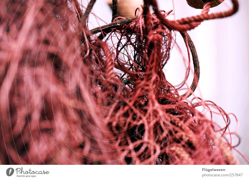 No net again? Net Fishing net Network Fishery Colour photo Macro (Extreme close-up) Copy Space left Muddled