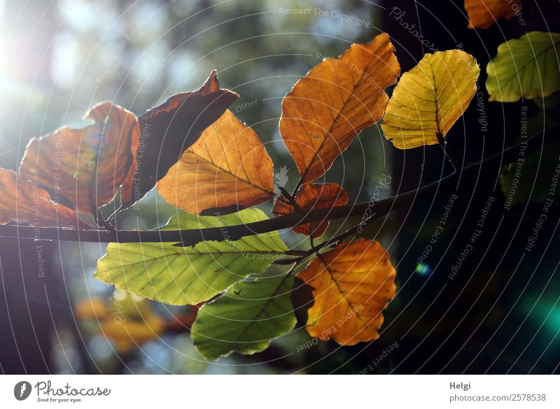 Emotions at the end of summer. Environment Nature Plant Autumn Beautiful weather Tree Leaf Twig Autumn leaves Illuminate To dry up Old Authentic Uniqueness