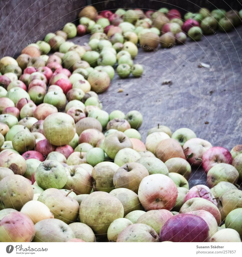 Nature Fruit Food Contentment Fresh Apple Harvest Organic produce Ecological Juicy Summery Vegetarian diet Trailer Nutrition Finger food Agriculture