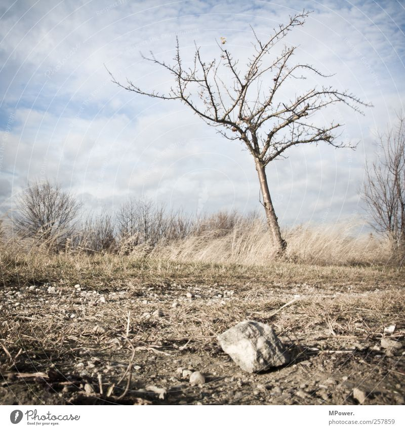 bleak Nature Landscape Plant Animal Sky Clouds Beautiful weather Tree Grass Bushes Fern Cold Gloomy Dry Bleak Stone Stony Autumn Earth Dirty Subdued colour