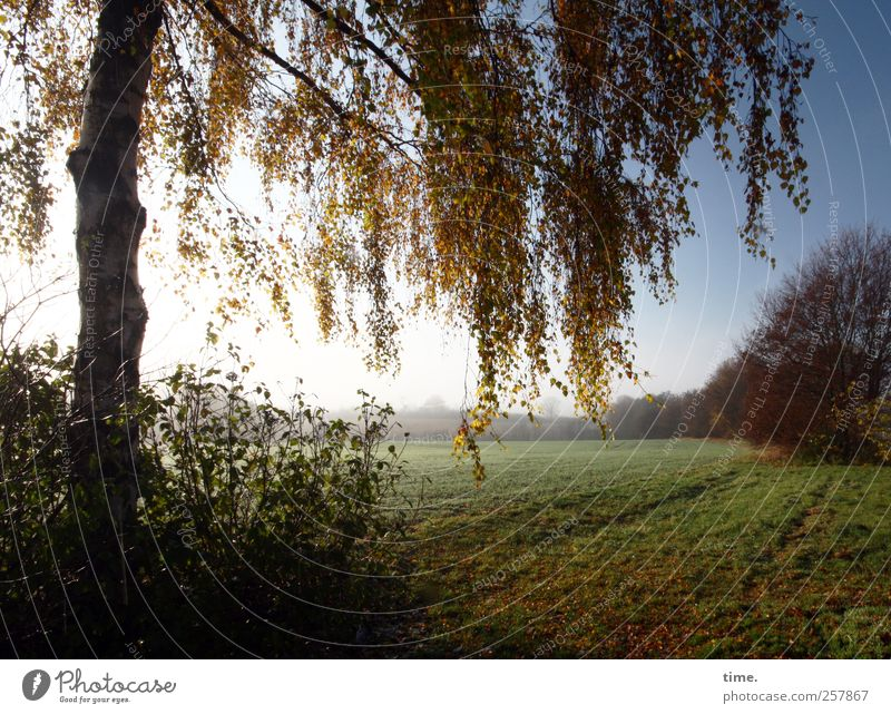 Nature Tree Plant Loneliness Relaxation Autumn Environment Landscape Grass Lanes & trails Moody Contentment Horizon Field Esthetic Transience