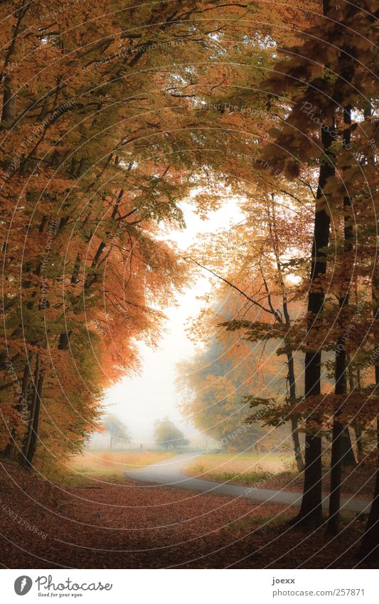 Where are you going, man? Nature Landscape Autumn Forest Street Lanes & trails Brown Yellow Green Black White Automn wood Colour photo Multicoloured
