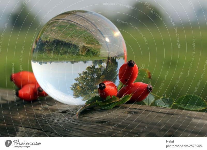autumnal gimmick with the glass ball Environment Nature Landscape Plant Sky Autumn Beautiful weather Leaf Wild plant Rose hip Decoration Glass ball Wood Sphere