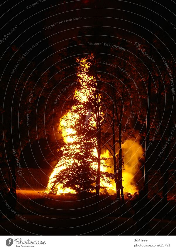 Fire behind the tree Tree Clearing Wood Burn Night Hot Physics Stack of wood Glint Red Yellow Blaze Flame Evening Feasts & Celebrations Summer solstice Warmth