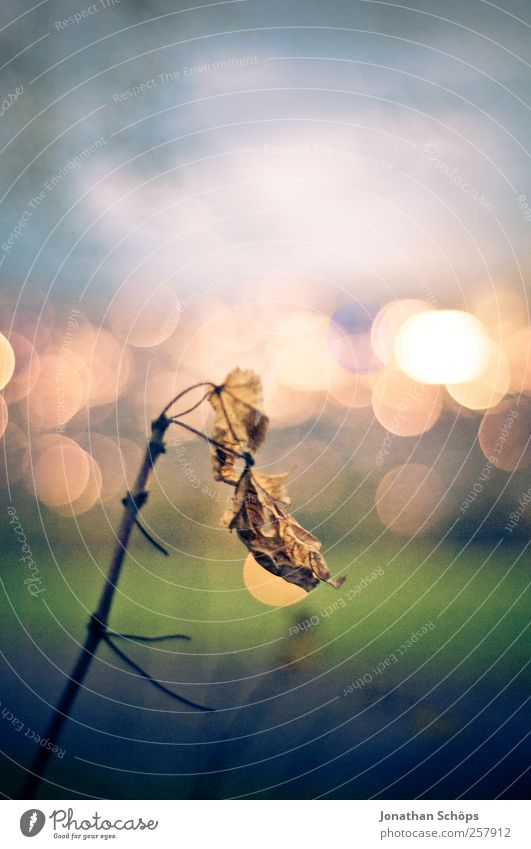 lonely leaf in front of a sea of lights [high] Environment Nature Landscape Sky Leaf Park Meadow Blue Brown Yellow Gold Green Emotions Moody Fear of the future