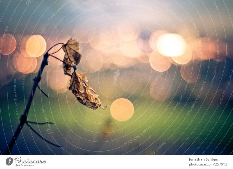 Nature Blue Green City Leaf Calm Loneliness Environment Landscape Emotions Moody Park Brown Contentment Gold Glittering