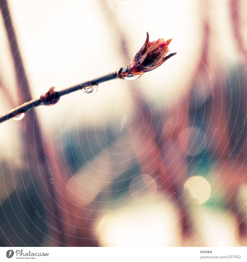Red Plant Winter Life Snow Environment Garden Sadness Spring Park Rain Weather Drops of water Hope Bushes Grief