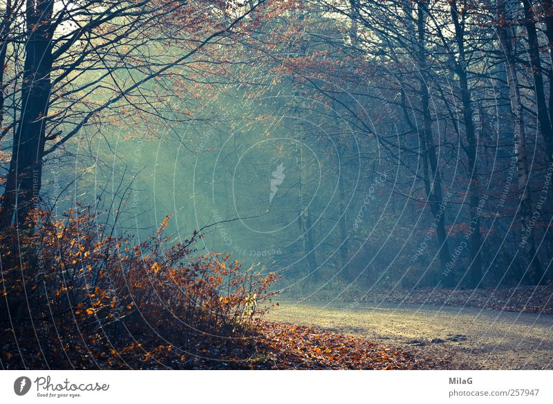 November light Calm Meditation To go for a walk Nature Sunlight Autumn Winter Forest Clearing Lanes & trails Relaxation Illuminate Blue Gold Happy Belief Hope
