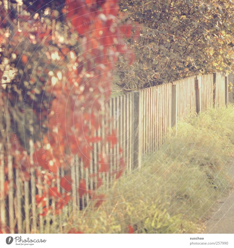 blooming autumn bush over a fence in the sunlight with soft colours   chaman aspic Environment Nature Autumn Climate Beautiful weather Grass bushes Idyll rural