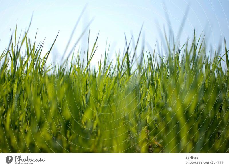 Sky Nature Blue Green Plant Meadow Environment Grass Garden Park Growth Beautiful weather