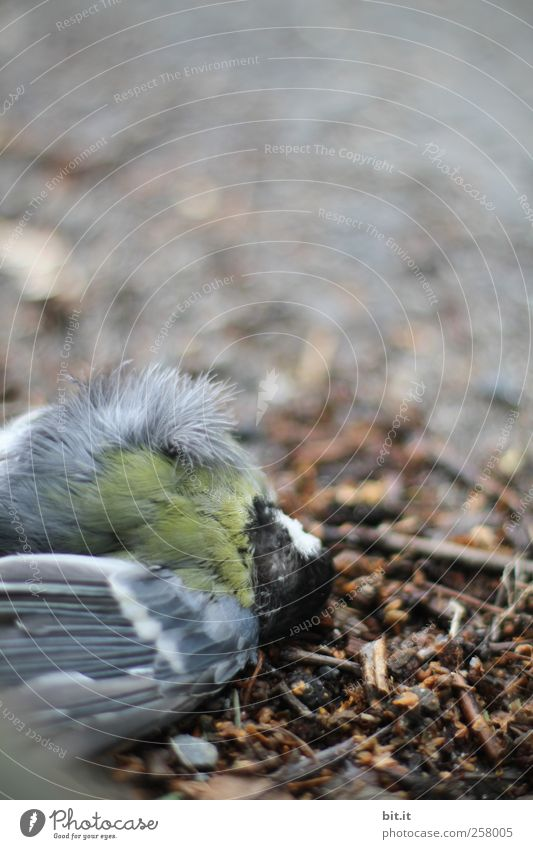 Nature Animal Death Environment Sadness Brown Bird Earth Dirty Lie Dangerous Floor covering Wing Grief Feather Transience