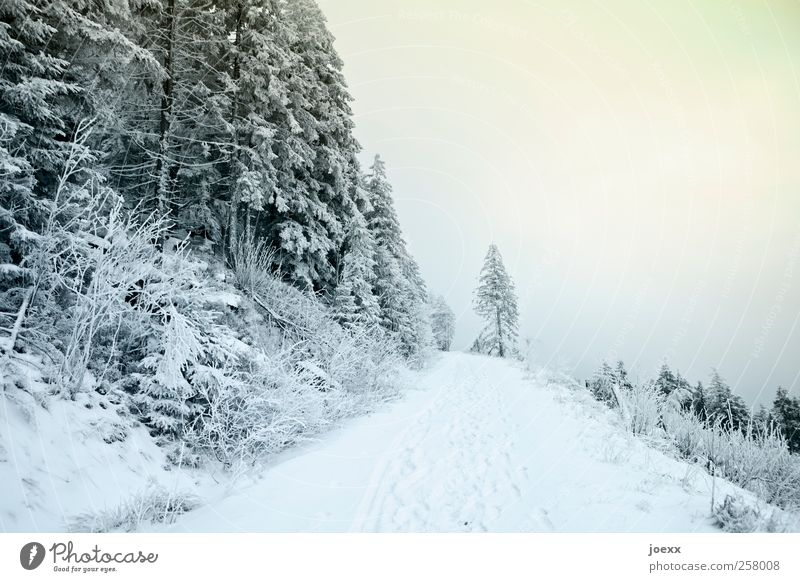 The road is over Landscape Sky Clouds Winter Weather Snow Lanes & trails Cold Blue Yellow Green Black White Colour photo Exterior shot Deserted Day
