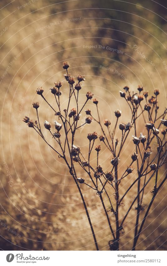 arid Environment Nature Landscape Sunlight Beautiful weather Plant Wild plant Meadow Field Blossoming Illuminate Faded To dry up Brown Yellow Gold Green Black
