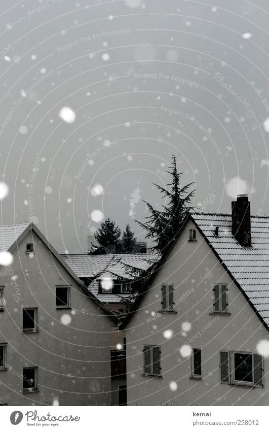 First of all Winter Bad weather Ice Frost Snow Snowfall Tree Village Small Town House (Residential Structure) Detached house Facade Window White Snowflake Gray