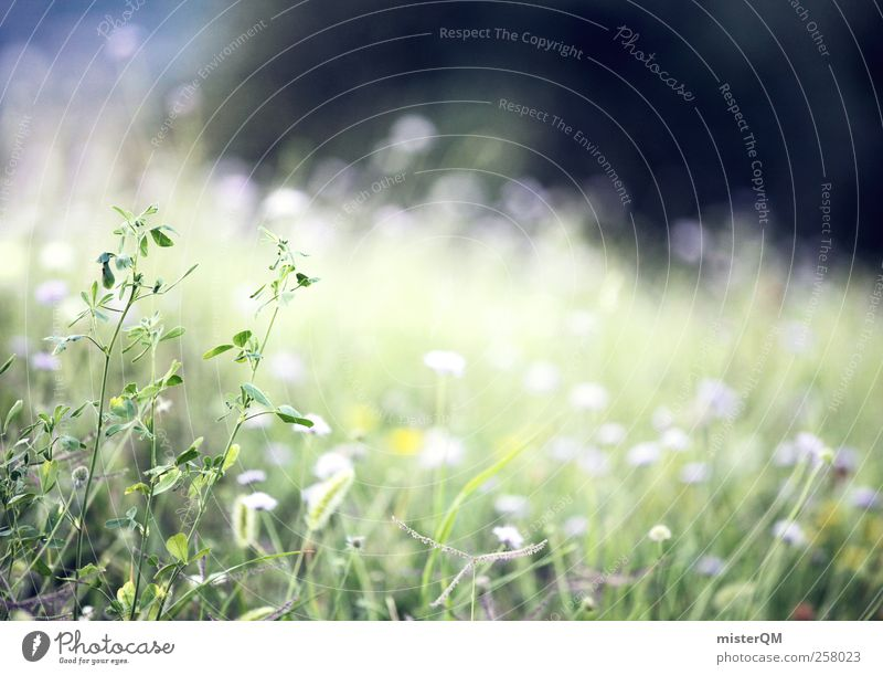 Nature Green Relaxation Calm Meadow Grass Spring Natural Background picture Art Growth Idyll Fresh Esthetic Fantastic Soft