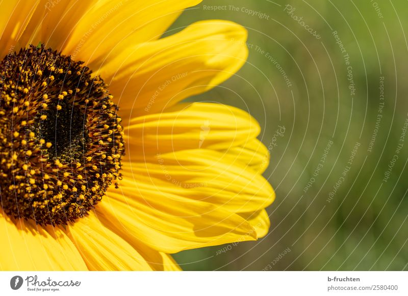 sunflower Summer Sun Garden Agriculture Forestry Plant Leaf Blossom Agricultural crop Friendliness Happiness Yellow Green Optimism Power Warm-heartedness