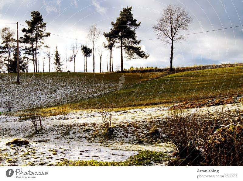 Snow - or snow free? Environment Nature Landscape Plant Earth Air Sky Clouds Sun Autumn Winter Weather Beautiful weather Tree Grass Bushes Leaf Meadow Field