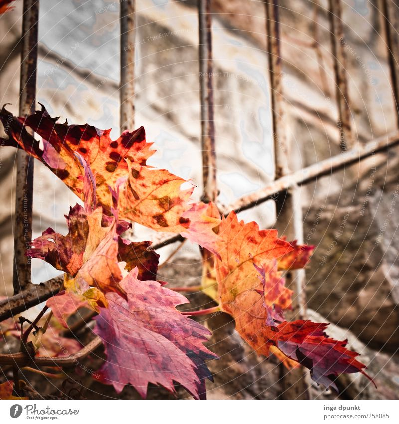 Nature Red Plant Leaf Yellow Autumn Wall (building) Environment Landscape Garden Wall (barrier) Park Stairs Bushes Transience Derelict