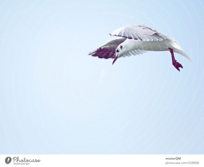 What? Animal Esthetic Bird's-eye view Seagull Gull birds Curiosity Looking Flying Hover Wing Stop short Snapshot Discover Foraging Airplane landing Freedom