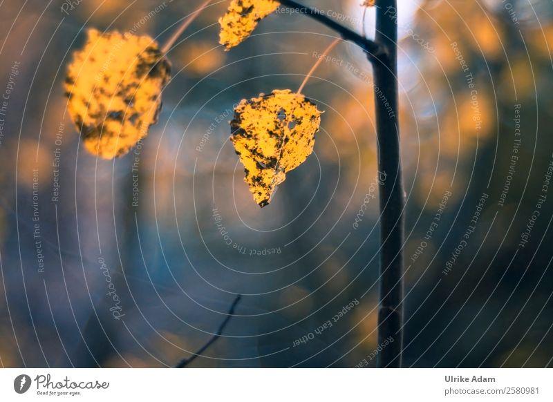Nature Plant Blue Tree Leaf Forest Dark Warmth Yellow Autumn Sadness Death Brown Design Transience Change