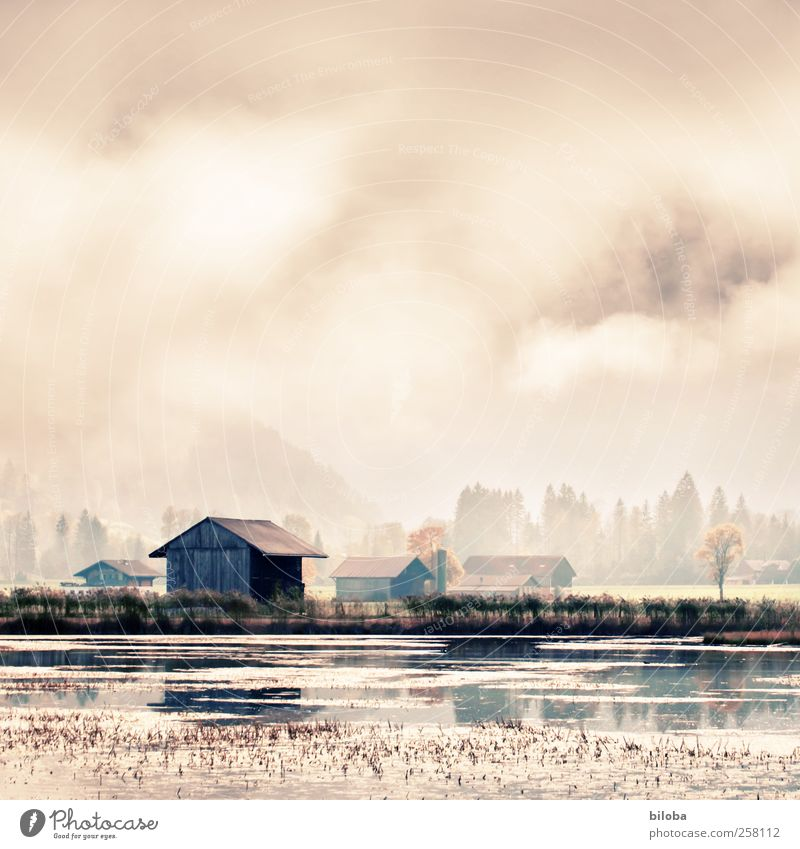 lakeside Environment Nature Landscape Water Clouds Sunlight Summer Autumn Lake Beach Common Reed Shallow Lakeside Gold Gray Green House (Residential Structure)