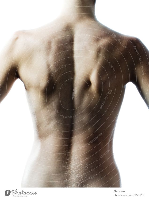 anatomy Human being Athletic Torso Back back muscles Back pain Spinal column Musculature Colour photo Subdued colour Interior shot Studio shot Isolated Image