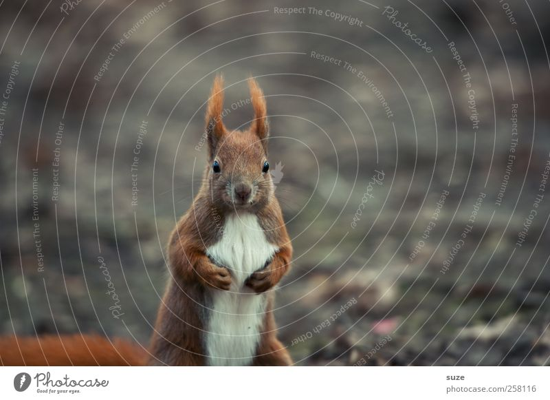 Profiboxer in flyweight Environment Nature Plant Animal Autumn Climate Pelt Wild animal 1 Cool (slang) Brash Small Funny Curiosity Cute Brown Gray