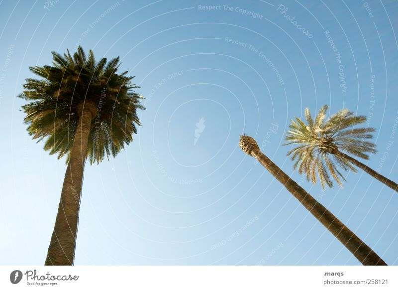 headless Exotic Well-being Vacation & Travel Tourism Far-off places Summer vacation Cloudless sky Beautiful weather Palm tree Sign Dream Fresh Contentment