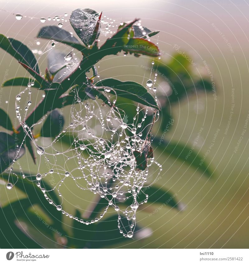 spider's web Nature Landscape Water Autumn Foliage plant Garden Park Meadow Field Forest Natural Yellow Green Black White Spider's web Dew Muddled