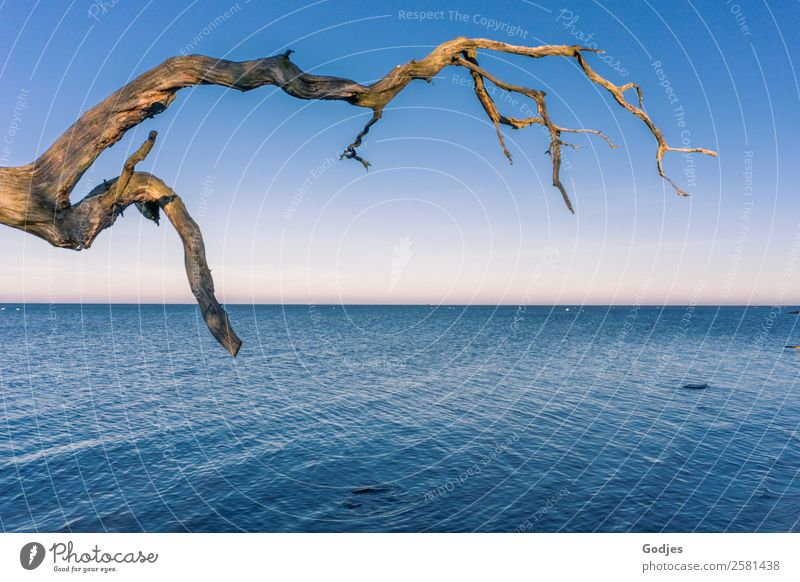 Weathered branch at the water Nature Water Cloudless sky Horizon Winter Beautiful weather Tree Branch Coast Beach Boddenlandscape NP Old Exceptional Historic